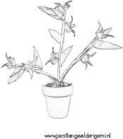 Kleurplaat Tulp Narcis Hyacint Kleurplaat Tulp Www Dewereldvanwiepje