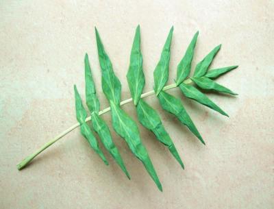 Joost langeveld origami page origami leaf a leaf origami fern mightylinksfo