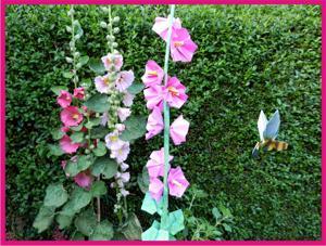 Joost langeveld origami pagina for Gerbera in de tuin
