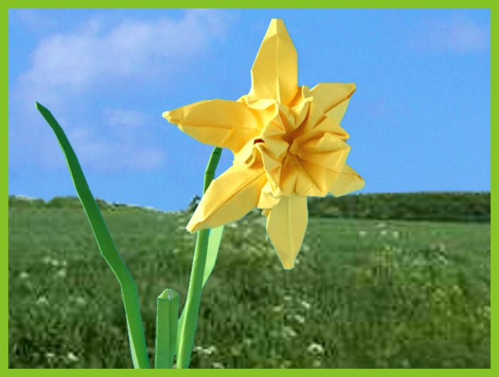 origami narcis